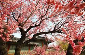 春季游首尔,这些美景你值得拥有!