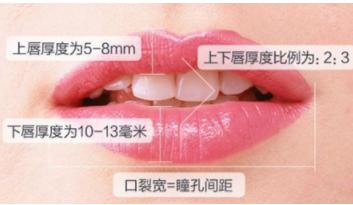 嘴唇比例图