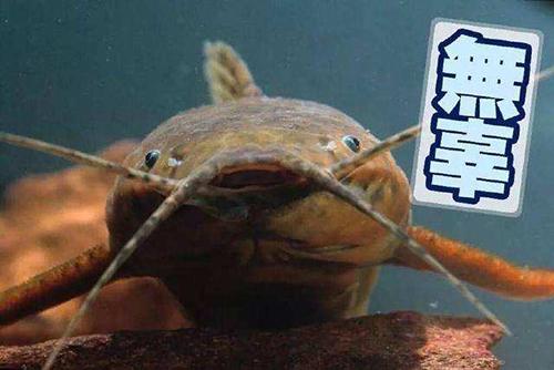 鯰魚臉怎么整容才好看