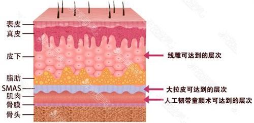 人體皮膚組織各層次示意圖