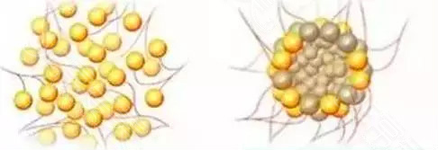 成活率高的脂肪細胞和不高的細胞照片