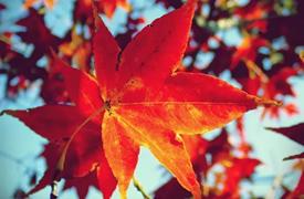 超浪漫的韩国秋季枫叶美景,你一定不要过错!