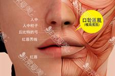 唇裂鼻畸形修复方式分享,一边高一边低也能进行修复?